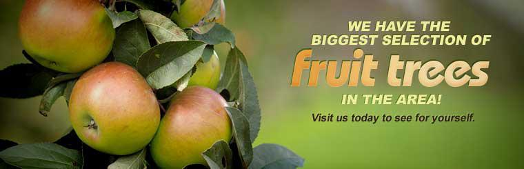 We have the biggest selection of fruit trees in the area! Visit us today to see for yourself.