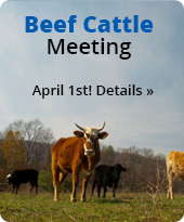 Beef Cattle Meeting. April 1st! Details.