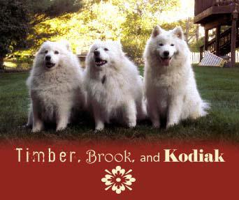 Timber, Brook, and Kodiak