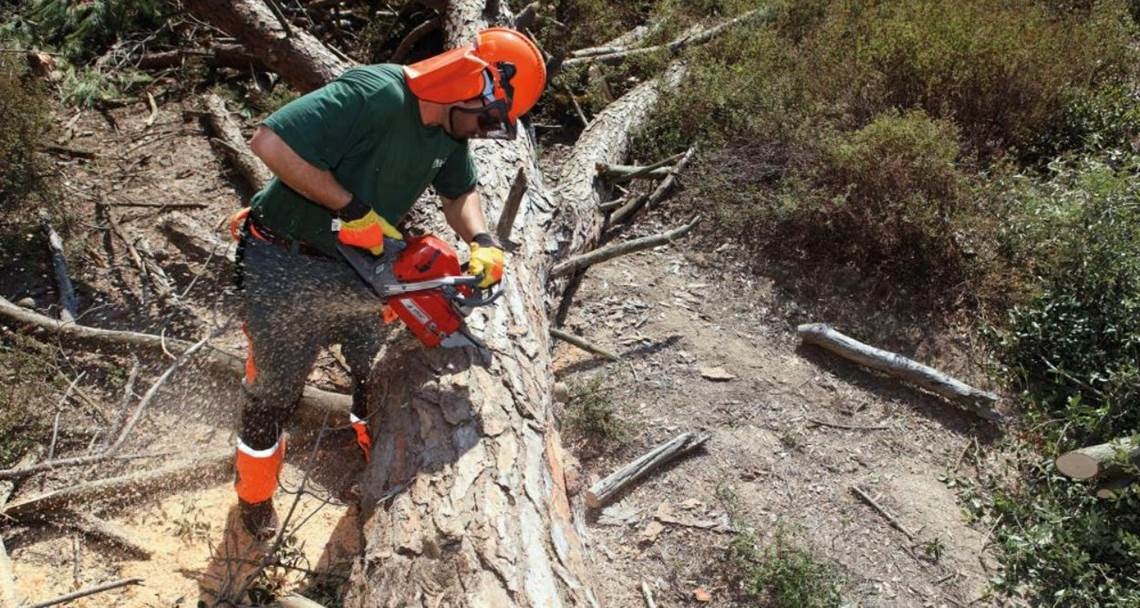 efco chainsaw cutting tree