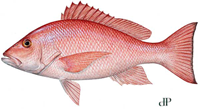 red snapper 2018 harvest dates