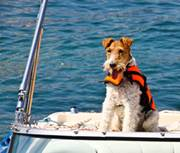 terrier-on-a-boat-alamy-ec5x7h-335lc050415jpg