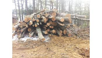 Tons of firewood forsale!
