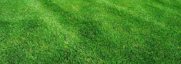 How-to-Seed-a-New-Lawn