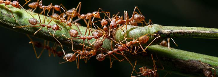 how-to-get-rid-of-ants(1)