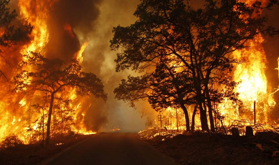 Picture of a raging forest fire engulfing all the trees.