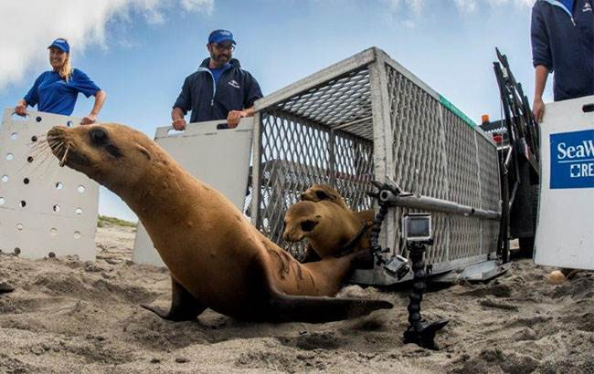 Sea-Lion-Beach-Release_650x410