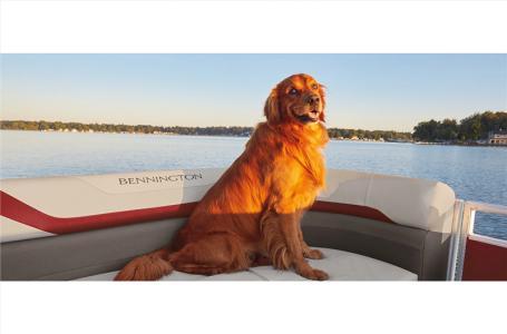 2021 Bennington boat for sale, model of the boat is 21 SSBX & Image # 5 of 11