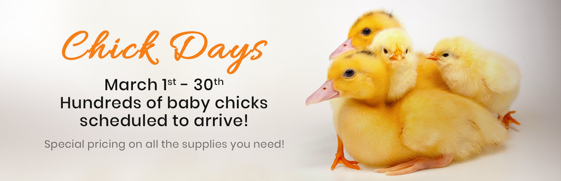 Join us March 1st - 30th for Chick Days! Click here for details.