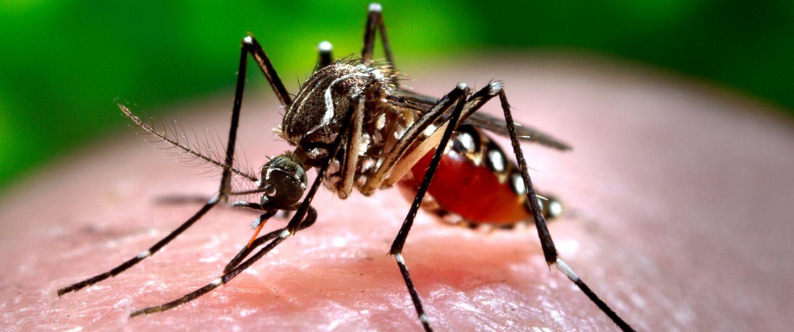 mosquito dangers u0026 prevention zika virus west nile virus