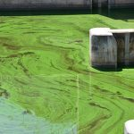 algae-bloom-1