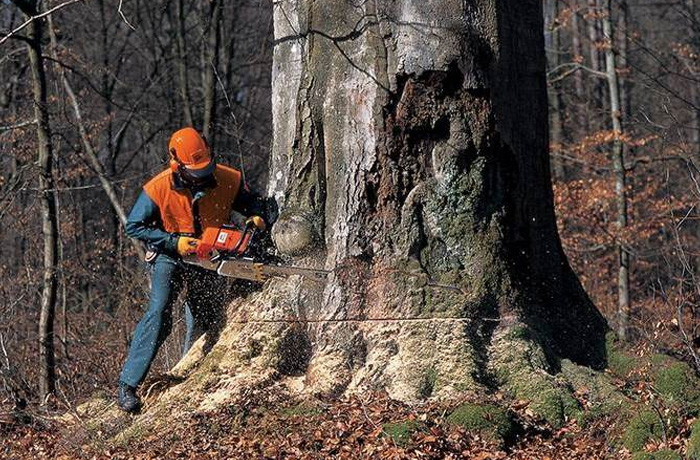 Stihl Commercial Forestry Chainsaws