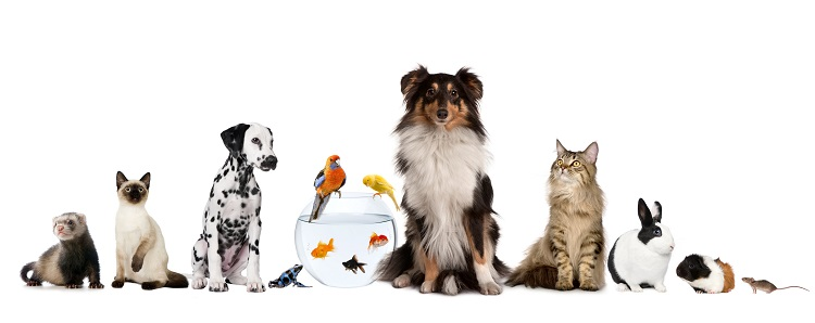 Veterinary compounding for pets in Hamden, CT