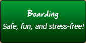 Boarding: Safe, fun, and stress-free!
