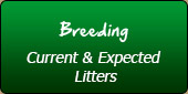 Breeding: Current & Expected Litters